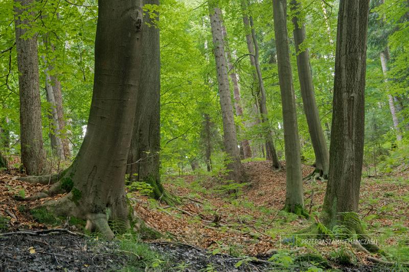przepraszamniemamczasu.jedra.pl - Forest by MJ ND800_18796