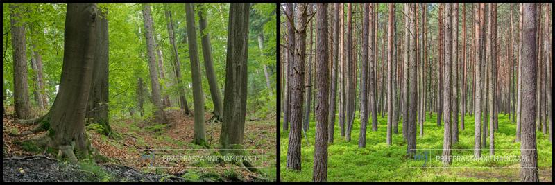 przepraszamniemamczasu.jedra.pl - Forest comparision